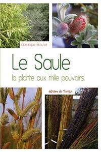 Le Saule - La plante aux mille pouvoirs