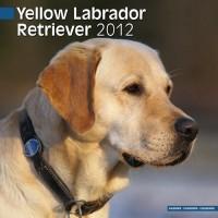 Calandrier 2012 - Le Retriever jaune de Labrador (yellow)