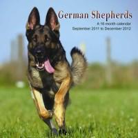 Berger Allemands Calendrier 2012 - German Shepherd 2012 Calendar