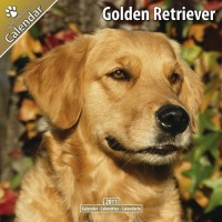 Golden Retriever 16 Mois 2011 Calendrier