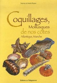 Coquillages, Mollusques de nos côtes Atlantique, Manche