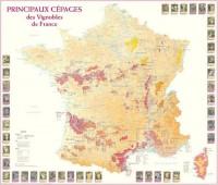 Principaux Cepages Vignobles de France (25)