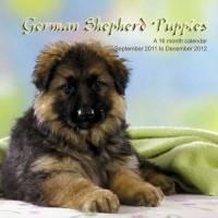 Bergers Allemands Chiots Calendrier 2012 - German Shepherd Puppies 2012 Calendar