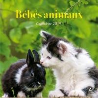 Bébés animaux - Calendrier 2019