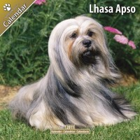 Lhasa Apso 16 Mois 2011 Calendrier