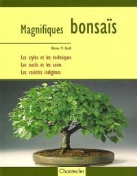 Magnifiques bonsaïs