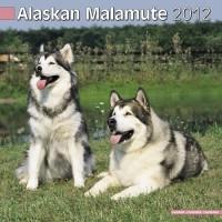 Calandrier 2012 - Malamute alaskien
