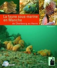 Faune Sous-Marine en Manche  de Cherbourg au Havre Itineraire 3