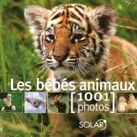 Les bébés animaux : 1001 Photos