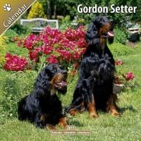 Gordon Setter 16 Mois 2011 Calendrier