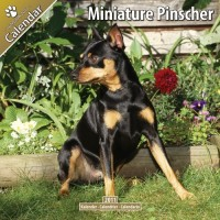 Miniature Pinscher 16 Mois 2011 Calendrier