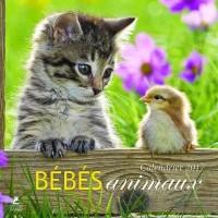 Bébés animaux, calendrier 2017