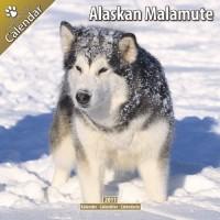 Alaskan Malamute 16 Mois 2011 Calendrier