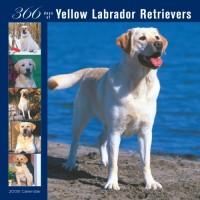 Labrador Retrievers, Yellow 366 Days 2008 Square Wall