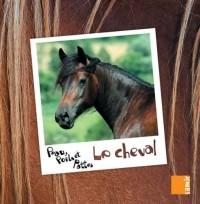Peau, poils et pattes - Le cheval
