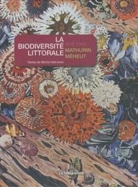 La biodiversité littorale vue par Mathurin Méheut
