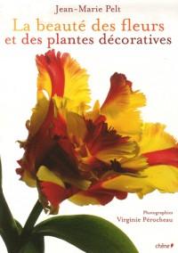 La beauté des fleurs et des plantes décoratives
