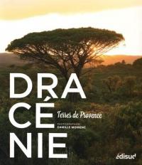 Dracénie : Terres de Provence