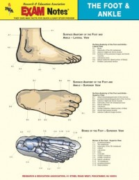 Foot & Ankle Anatomy Exam Notes