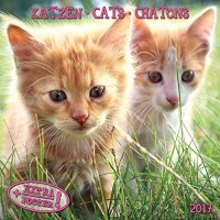 Katzen - Cats - Chatons 2017 Artwork