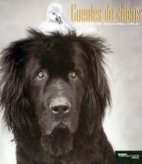 Gueules de chiens