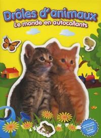 Drôles d'animaux (chatons) : Le monde en autocollants
