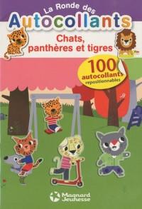 Chats, panthères et tigres