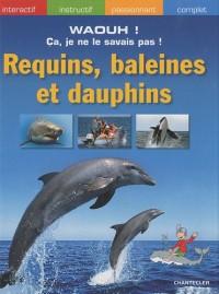 Requins, baleines et dauphins