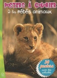 Les bébés animaux : Posters à colorier