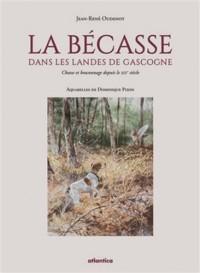 La bécasse dans les Landes de Gascogne : Chasse et braconnage depuis le XIXe siècle
