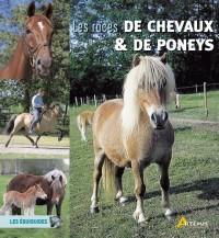 Les races de chevaux et de poneys