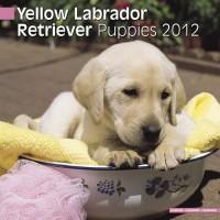 Calandrier 2012 - Yellow Labrador Puppies