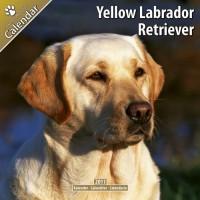 Labrador Ret (yellow) 16 Mois 2011 Calendrier
