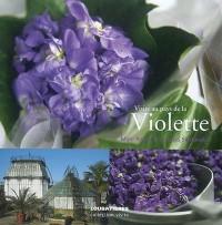 Visite au pays de la violette