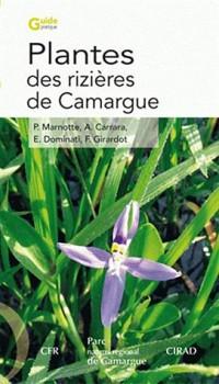 Plantes des rizières de Camargue