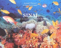 Sinaï. Visions de plongeurs en mer Rouge