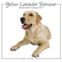 Labradors Yellow Studio 2011 Calendrier
