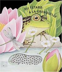 Du tétard à la grenouille