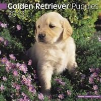 Calandrier 2012 - Golden Retriever Puppies
