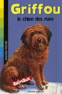 Griffou, le chien des rues