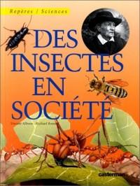 Des insectes en société