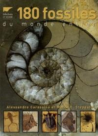 180 Fossiles du monde entier