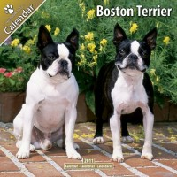 Boston Terrier 16 Mois 2011 Calendrier