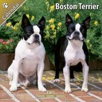 Boston Terrier 16 Mois 2011 Calendrier