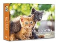 L'agenda-calendrier Chats & Chatons 2019