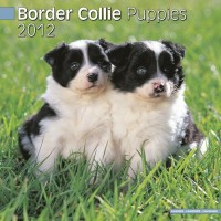 Calandrier 2012 - Border Collie Puppies