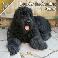 Bouvier Des Flandres (euro) 16 Mois 2011 Calendrier