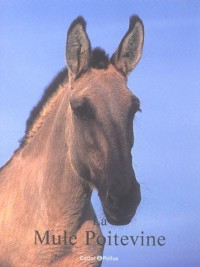 La Mule Poitevine